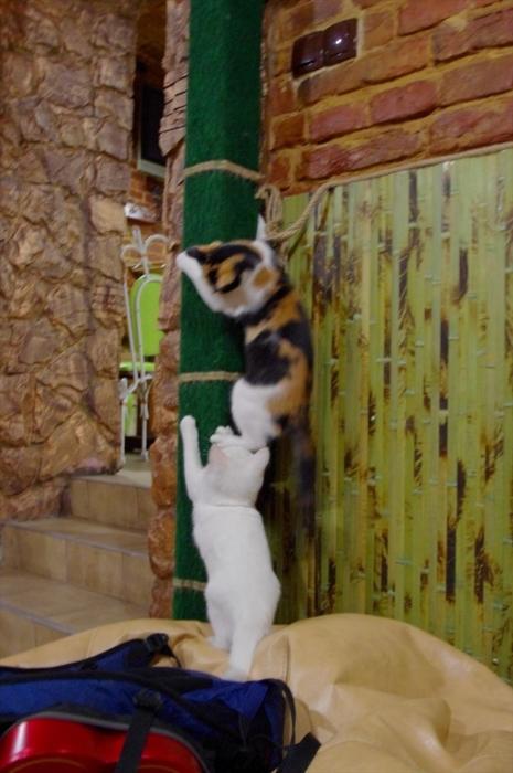 リヴィウの猫カフェ (15)