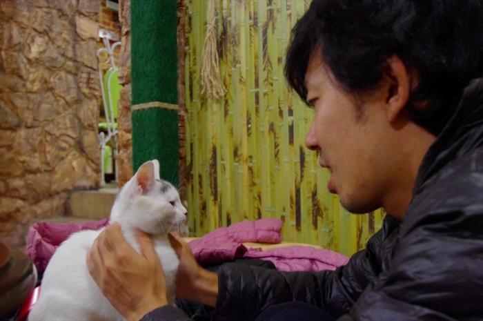 リヴィウの猫カフェ (28)