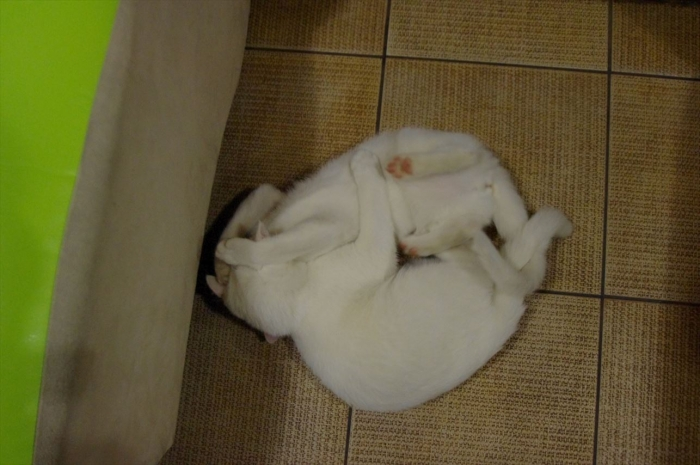 リヴィウの猫カフェ (39)