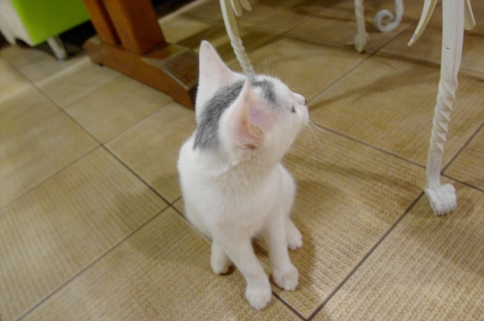リヴィウの猫カフェ (34)