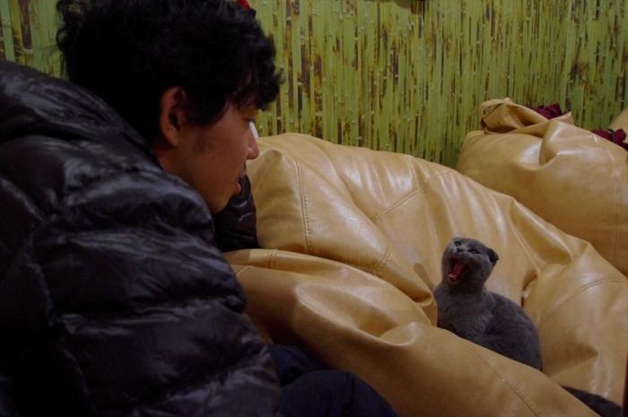 リヴィウの猫カフェ (41)
