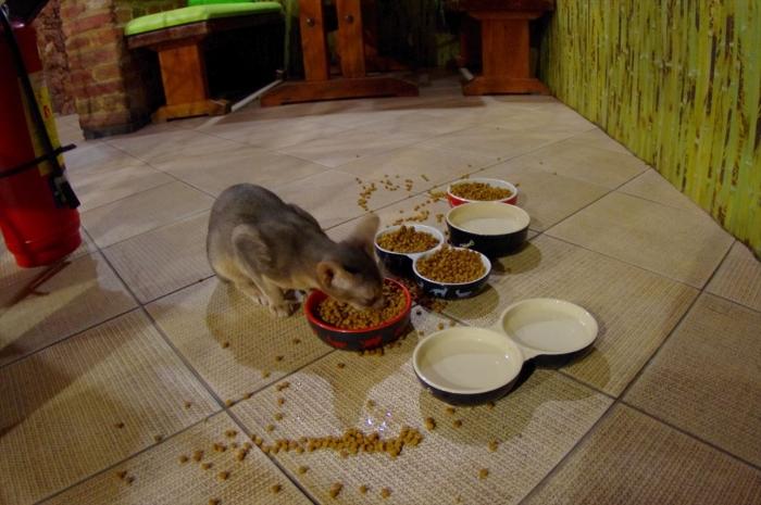 リヴィウの猫カフェ (50)