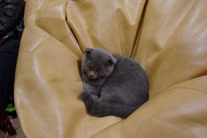 リヴィウの猫カフェ (52)