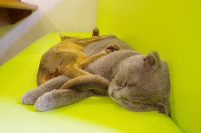 リヴィウの猫カフェ (58)
