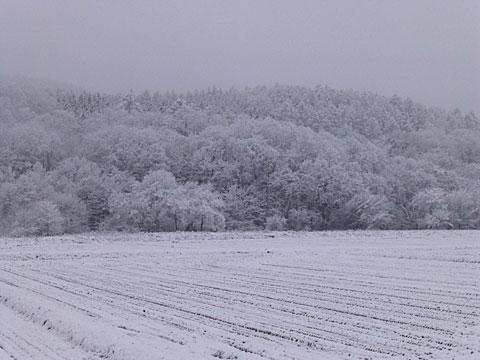 15 11/11 雪 山