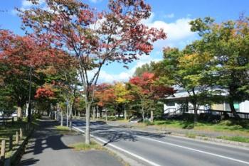 穏やかな秋晴れ