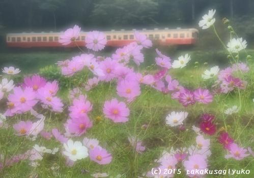 DSC_1654a_01.jpg