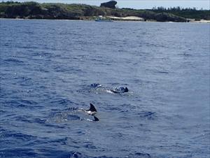水面イルカ