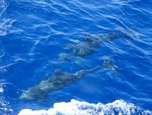 水面下イルカ