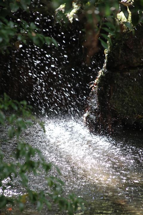 南禅寺天授庵の池