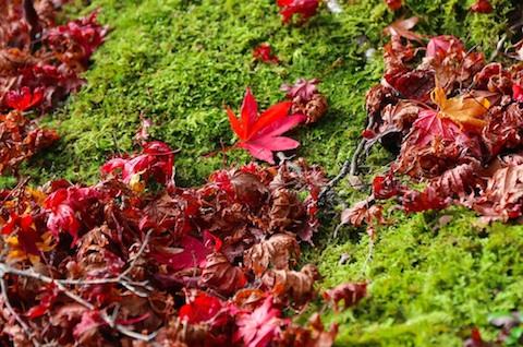 常寂光寺の紅葉と苔