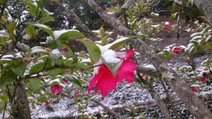 2_10椿雪