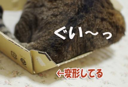 変形¥^^d-^あsd^あsdさだsdのコピー