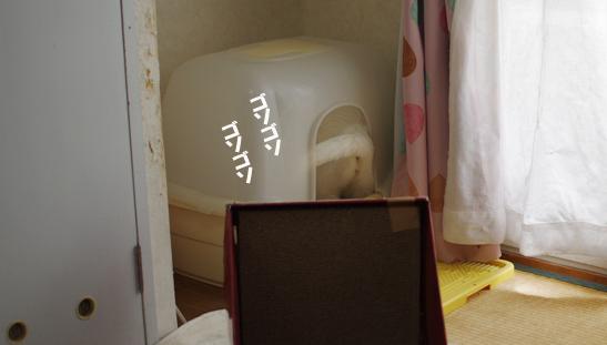 トイレにふたがつけれるようになった幸せsdあだsだsのコピー