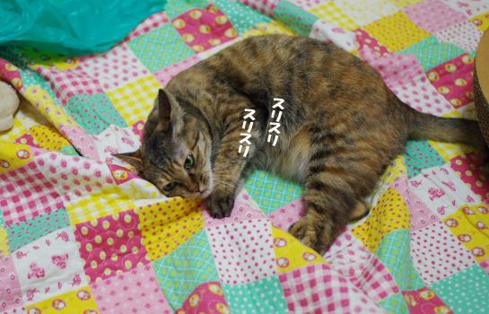 スリすり^¥さ^¥d-あs^だsのコピー