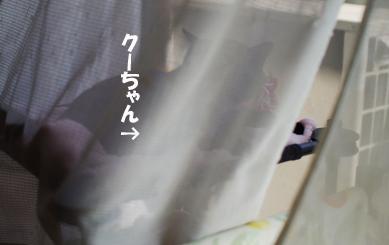 ふあz^¥あsだsだsdのコピー