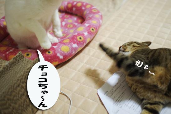 チョコちゃーん^¥^d^あ^だだdsのコピー