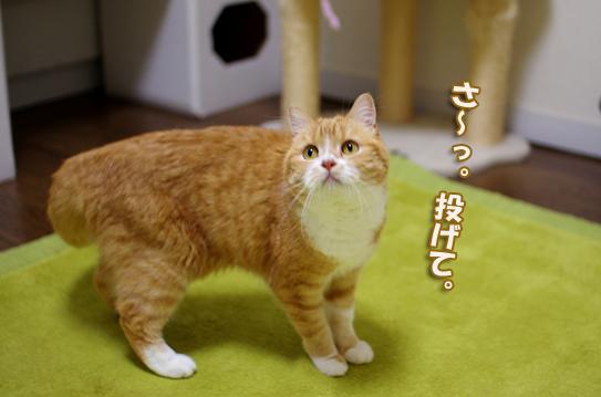 猫部屋超元気ぷぷsdsd38のコピー
