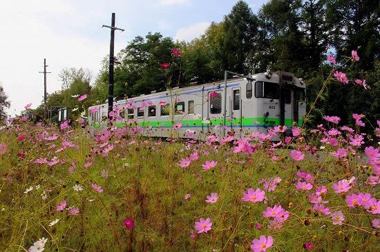 ①コスモスと列車