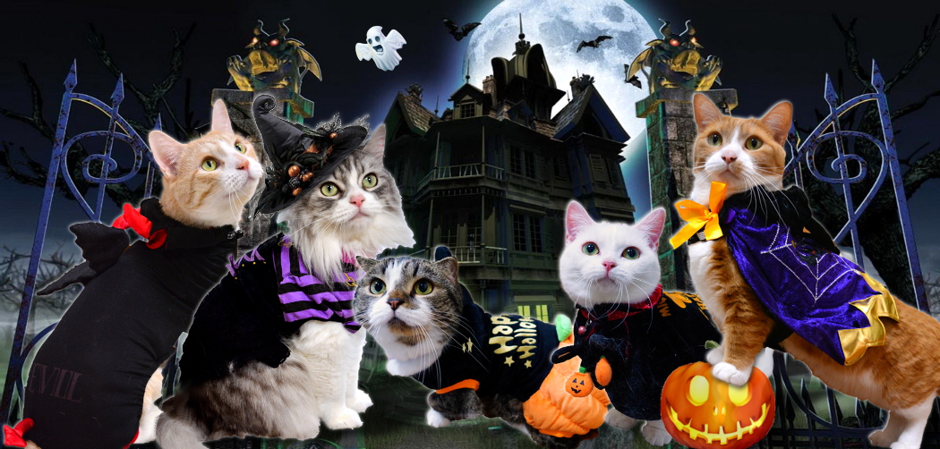 2015Halloween-Haunted-Castle.jpg