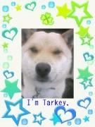 tarkey