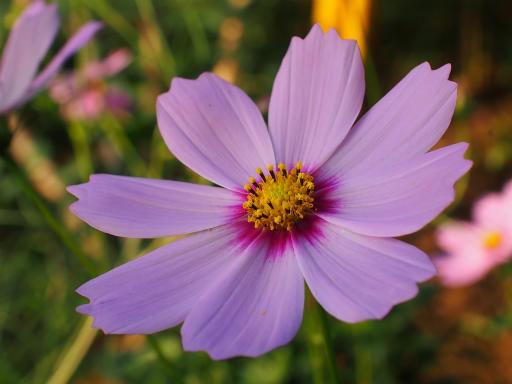 20151012・トトロ狭山湖植物09