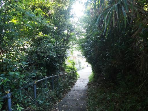 20151018・菩提樹散歩07