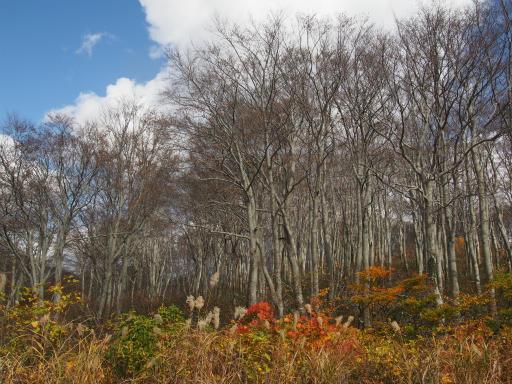 20151025・松之山予告03・関田峠
