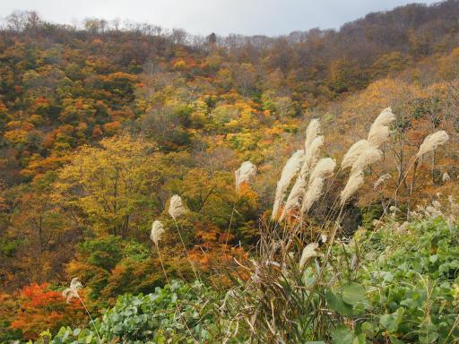20151025・松之山1-07