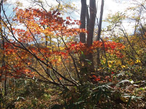 20151025・松之山6-18