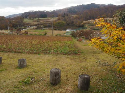 20151025・松之山カメさん05