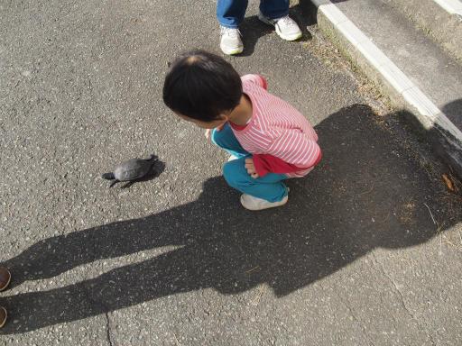 20151025・松之山カメさん21