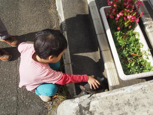 20151025・松之山カメさん20