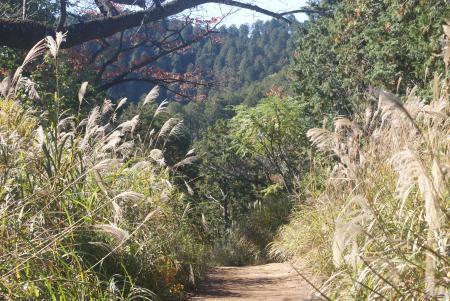 秋の尾根道