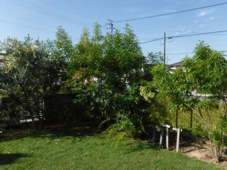 1庭の木を切る2
