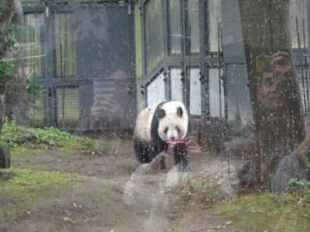 1上野動物園12