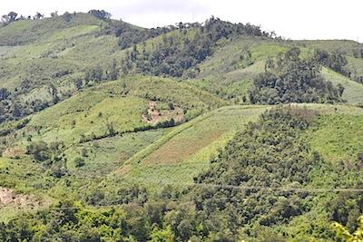 ベトナム伐採林