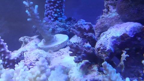 サンゴ20151121