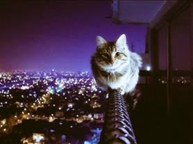 都内のマンションに住む友人が撮ったベランダの手すりに乗る飼猫