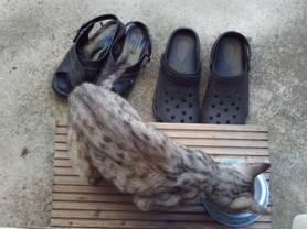 ペット猫となった老猫チータエサを与え水飲み場の水も入れる