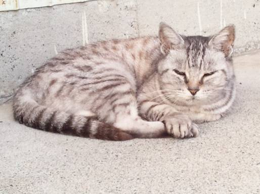 地域猫チータを久しぶりに近所の家でペットになり家の内外自由だった