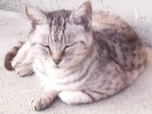 地域猫22歳老猫チータのつぶやき写真