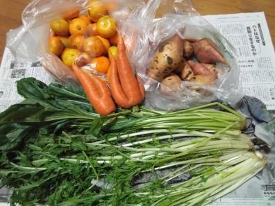 ブログ写真で近所の極親と知り合いから頂いたみかん、水菜、さつま芋、にんじんのデジカメ写真