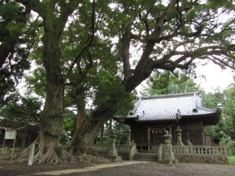 杉森八幡社社殿と大クスノキ