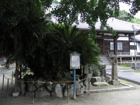 浄泉寺本堂と蘇鉄