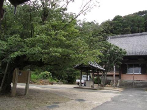 長福寺本堂とヤマザクラ