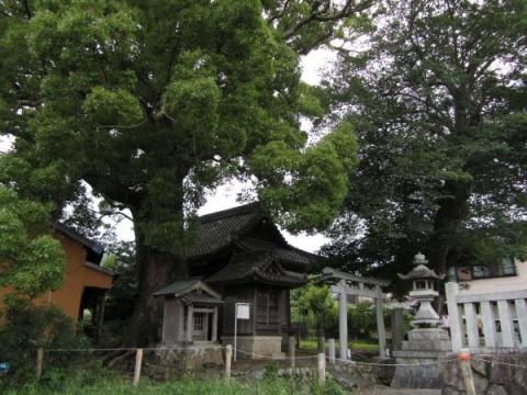 関川神社とクスノキ