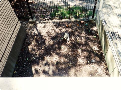 玄関の木3