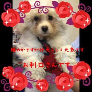 fc2blog_20150917171149495.jpg