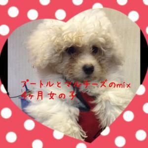 fc2blog_20150917171152634.jpg